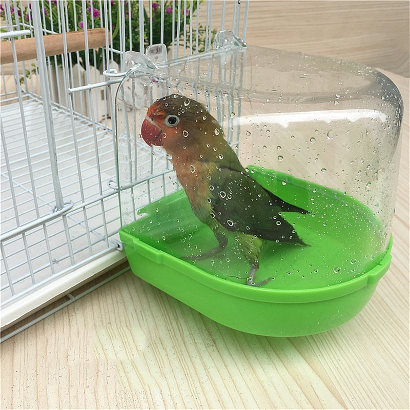Bird Bothing