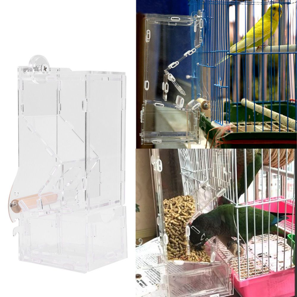 Parrot Lovebird Canary Aviary Clear