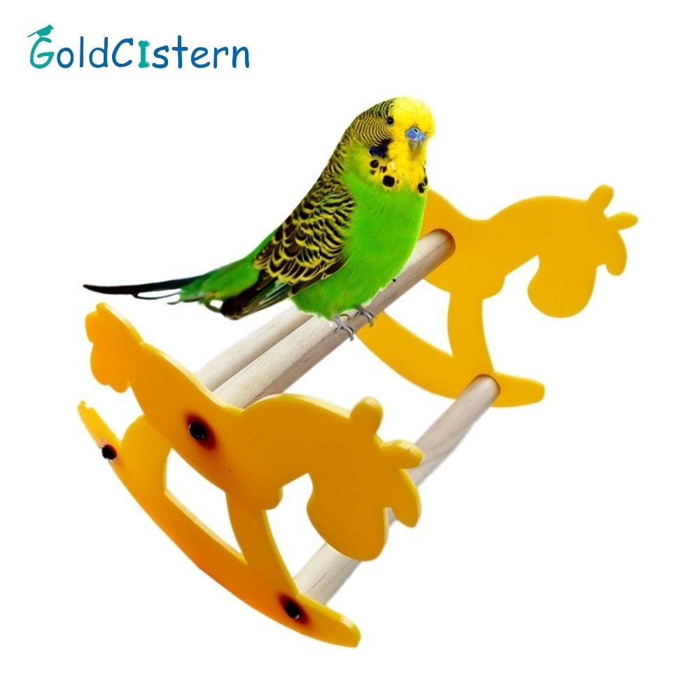 Arousing Parrot Bird Chewing