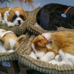How to choose a dog bed